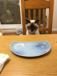 お魚もう無いよ