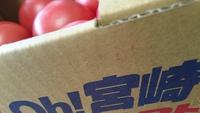 トマト買いに【えぷろん】
