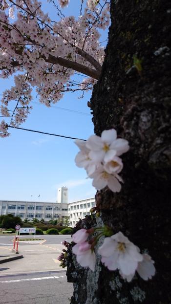 高専前桜と…