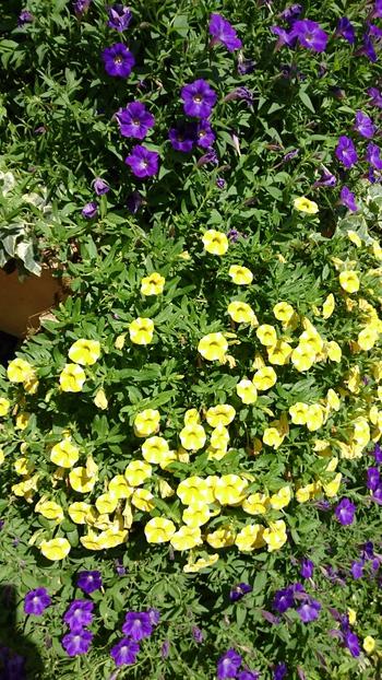 花遊庭で…こもれびマルシェ
