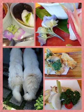 紫陽花とランチ【花屋敷みよし】