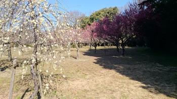 平芝梅林公園
