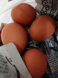 自分にできること【宮澤養鶏園】さんの卵…
