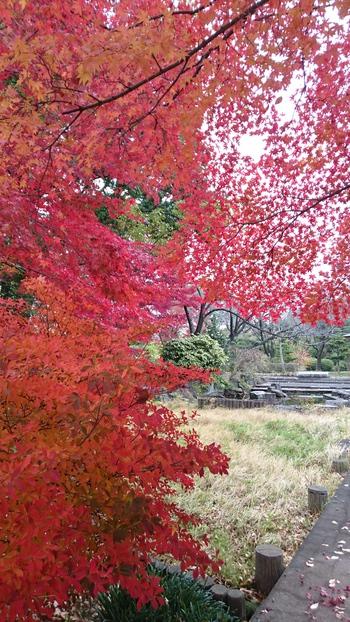 西山公園(平成27年12月9日撮影)