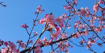 五平餅と桜