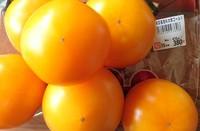 大橋園芸産直桃太郎ゴールドトマトソースかけ…っていうよりトマト煮込み