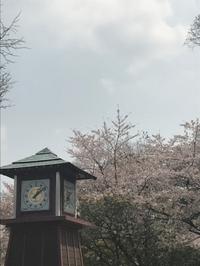 久しぶりの岡崎公園