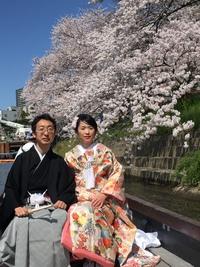 桜満開のなかで婚礼の前撮り