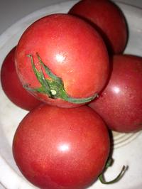 これぞ  自然栽培のトマト