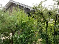 7/27  岡崎教室  台風ですが通常開講