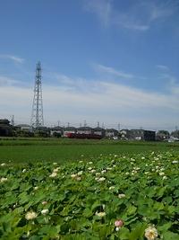 竹村駅近くの蓮田