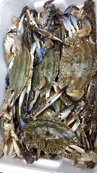 季節のおいしいもの、いっぱい☆おいしい魚料理!豊田市で和食のお食事会・宴会! 2016/08/07 09:00:00