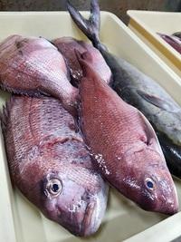 うまい刺身☆豊田市で魚を食べるなら当店で! 2017/10/20 12:50:55