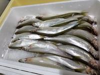 春においしいもんあれこれ☆魚貝祭り~♪