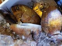 釣ったお魚を持ち込み!調理します。ご相談ください。豊田市魚料理