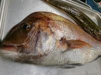 お客様の持ち込み☆釣ったお魚、調理しますよ!