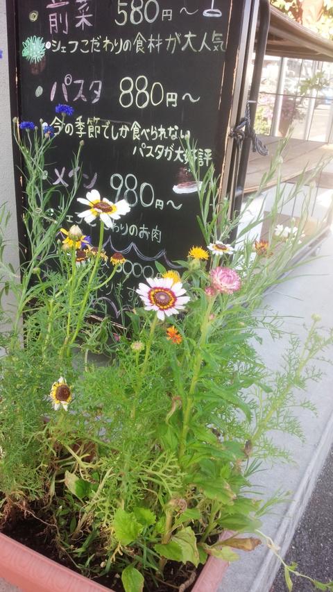 種から植えたお花が咲きました
