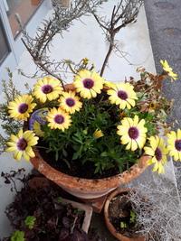 ずっと名前がわからなかった花の名前がわかりました!