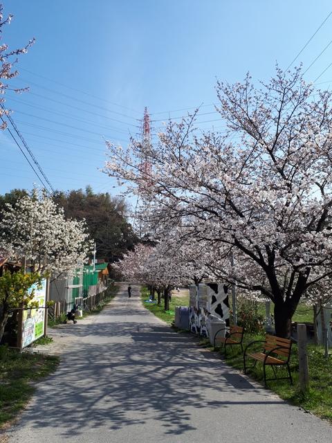 春ですね~❤