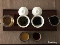 普洱茶試飲中