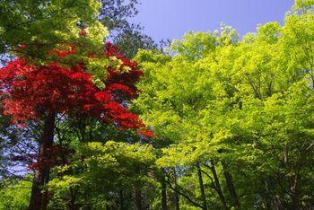 愛知県緑化センター 豊田市