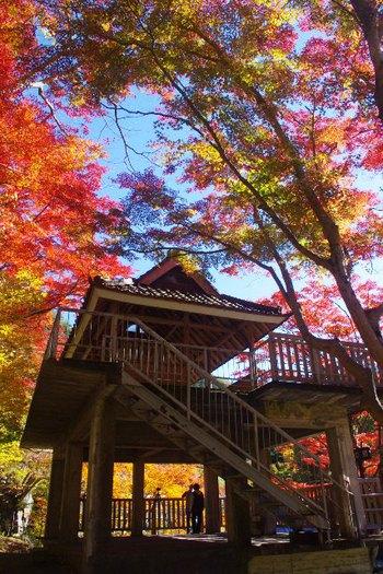 大井平公園の紅葉2014