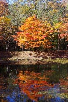 タカドヤ湿地の紅葉2014