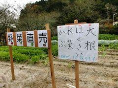 小原四季桜まつり 2013