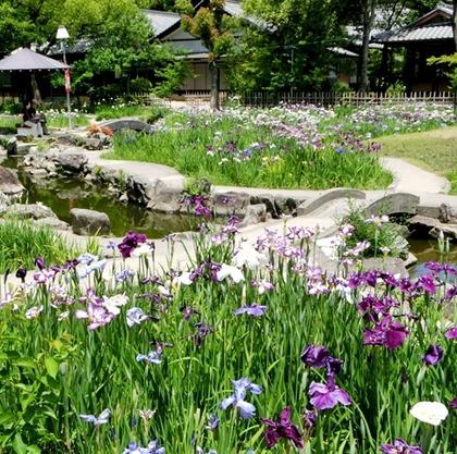 朝日公園 花しょうぶ園