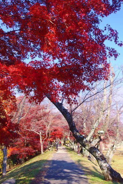 水源公園の紅葉