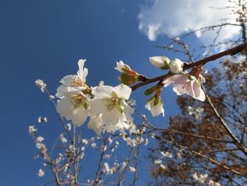 豊田市西山公園の紅葉