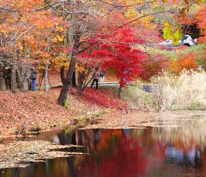 タカドヤ湿地の紅葉2013 豊田市
