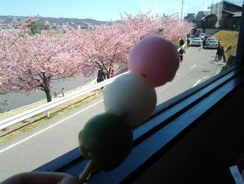 葵桜と団子