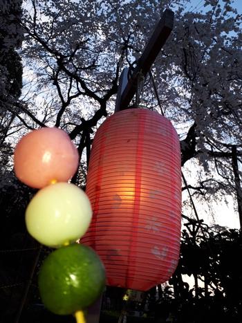 奥山田のしだれ桜ライトアップ♪