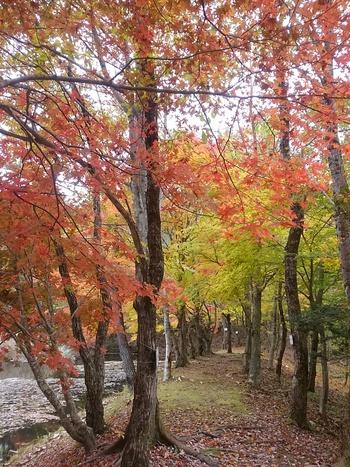 タカドヤ湿地の紅葉が見頃です♪