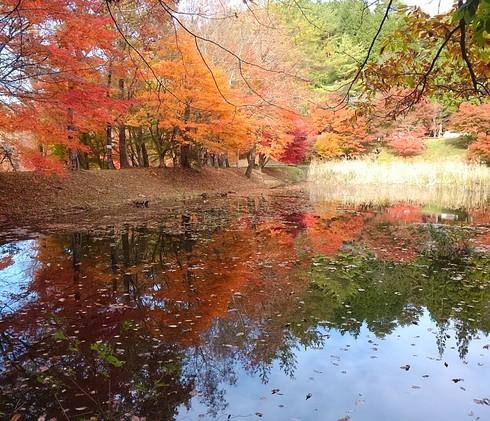 豊田市紅葉便り2017①タカドヤ湿地