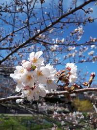 トヨタガーデン~春~春~春~
