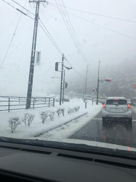 雪降ってるよー!