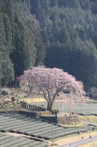 この春の総決算~桜花から手筒花火まで~