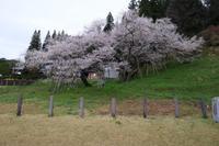 飛騨高山界隈の花と観光地を周遊!!