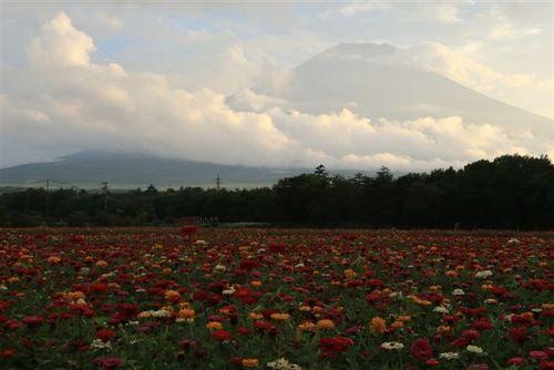 感動の花畑