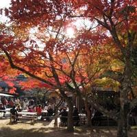 香嵐渓シンポジウムが今週の土曜日に開催されます。