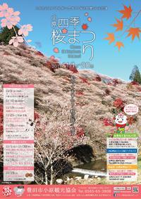 11/1~30 小原四季桜まつり!! 2017/11/08 20:00:00