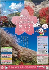 今年20周年の小原四季桜まつり♪ 2016/10/27 09:10:00