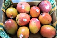 マンゴーを初めてコストコで買ったら
