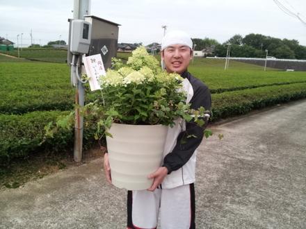 産直プラザにサン・サン・サンのヒマワリ参上!!