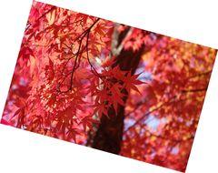 タカドヤ湿地の紅葉2012 豊田市稲武