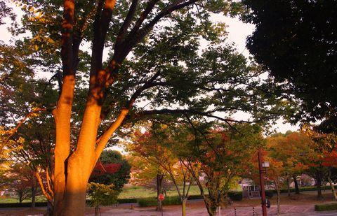 デジカメで撮る紅葉絶景