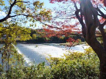 豊田市水源公園水源ダム近くの紅葉
