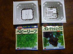 水耕栽培 サラダ編 ①種まき